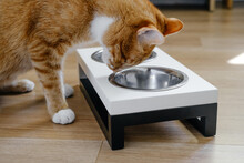 Ginger Cat Is Eating From The Bowl, Food And Water In Connected Heavy Plates At Home. Animal Can Not Split The Water. Complete And Balanced Diet