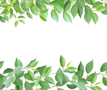 Frame With Branches And Green Leaves. Cherry Twigs Border