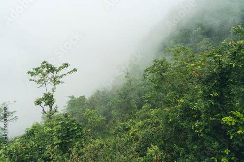 Fotografia Misty dark pine forest in the morning on the mountainside