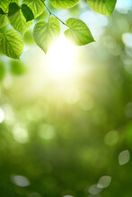 Fresh Spring, Summer Green Foliage Of Tree Leaves And A Bright Sunny Springtime Bokeh Portrait Background.