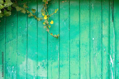 Tela Green wooden door with creeper plants