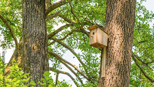 Fotografering Wooden birdhouse. Birdhouse for birds on a tree in the forest.