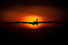 Barbed Wire Silhouette In A Orange Background