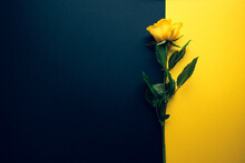 Yellow Rose On Trendy Black And Yellow Colour Block Geometric Background. Fashionable Template In Flat Lay Style With Place For Your Text. Minimal Mockup Concept.