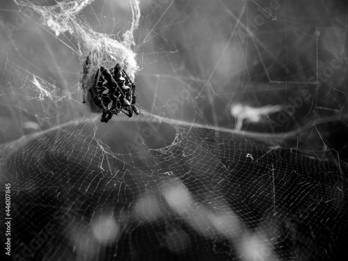 Selective focus shot of a spider in its natural environment Fototapet