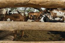 Día De Campo Y Animales En El Rancho.