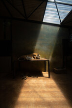 A Trapped Tiger Lies In The Johannesburg Zoo