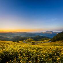 "Landscape ""Tung Bua Tong"" Or Mexican Sunflower Field At Sunrise Sky ,Maehongson (Mae Hong Son) Province, Thailand."
