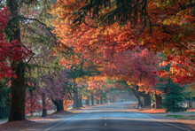 Many Colours Of Autumn Trees Looking Through The Avenue