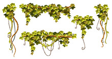 Liana Branches, Ivy And Tropical Leaves. Set Of Creeper Jungle. Isolated Cartoon Vector Hedera Helix On White Background.