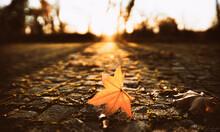 Leaf In The Sun.