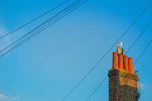 Large Seagull Sits On A Red Chimney Pipe