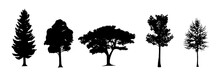 Trees Silhouettes. Vector Isolated Retro Images Nature Set. Forest And Park Pines Firs And Spruces, Coniferous And Deciduous Trees