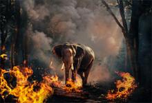 Animal Habitat On Fire