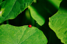 Ladybug, Insect, Ladybird, Leaf, Nature, Bug, Beetle, Macro, Grass, Plant, Spring, Summer, Garden, Animal, Fly, Red, Small, Flower, Flora, Close-up, Leaves, Lady, Wildlife, Green, Closeup, Tree, Beaut