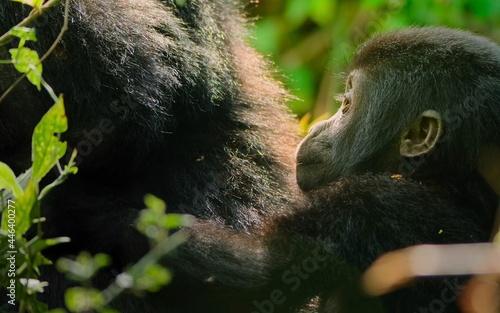 Fototapeta premium Jungle mammals