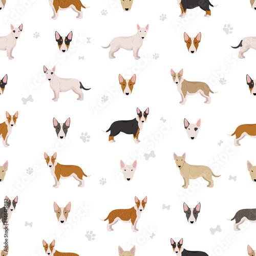 Fotografering Miniature bull terrier seamless pattern