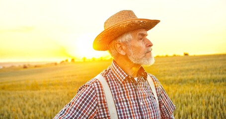 Portrait of the senior Caucasian good looking wise man farmer in a hat looking at the side, in the wheat field. Portrait. Male worker in agricultural farm. Sunlight. Agriculture farming.