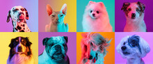 Art Collage Made Of Funny Dogs Different Breeds And Grace Cat Sphinx On Multicolored Studio Background In Neon Light.