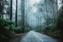Misty Winding Road Through The Rainforest
