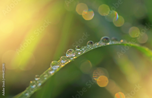 raindrops or dew on a green blade of grass close-up, an abstract image of nature Fotobehang