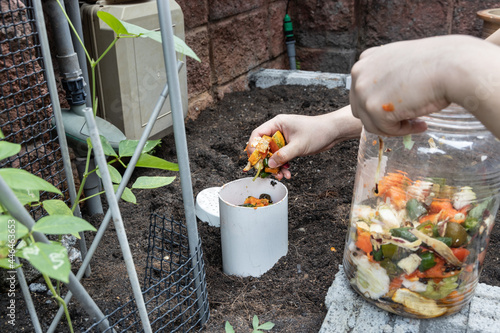 Obraz na plátne Person filling the worm tower with kitchen organic waste