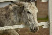 Donkey In The Farm Enclosure 8