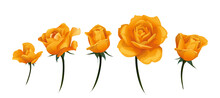 Orange Yellow Rose Bud Side-view Isolated On White Vector Illustration.
