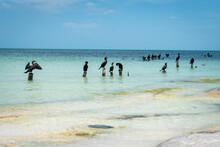Gaviotas Sobre Palos Verticales Dentro De Una Playa Turquesa Del Caribe