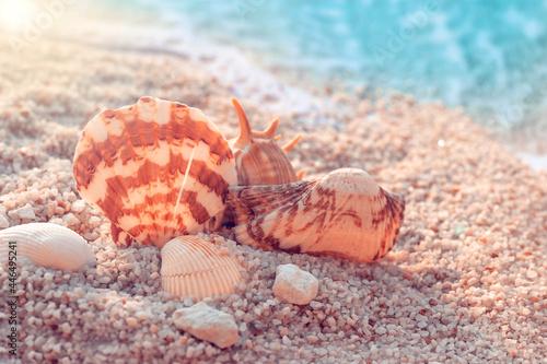 Fototapeta Closeup of brown seashells in the send on a blue burred background