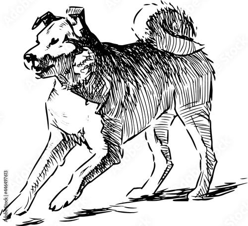 Freehand drawing of snarling mongrel dog Fototapeta