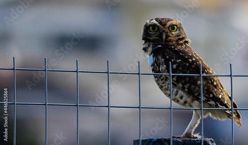 Canvas-taulu Owl on the sun