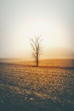 Sunset In The Fog, Tree On The Beach, Beautiful Scene Of Tree With Brown Grass