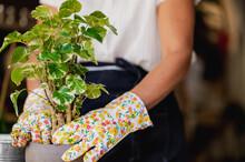 Female Gardener Planting Green Plant In Pot In Flower Shop