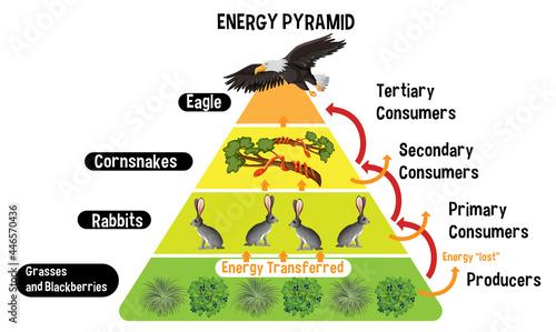 Canvastavla Diagram showing energy pyramid for education