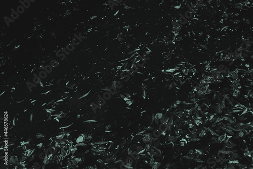 Canvas Print Leaves in a River at Night