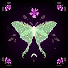 Vector Illustration Of Moon Moth And Purple Flower