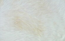 White Fur Background