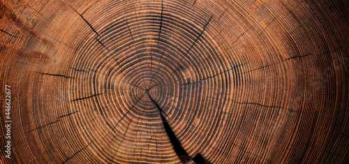 Canvastavla wood texture of old stump