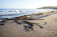 Masses Of Seaweed Washed Ashore In The Pacific Ocean On A Sunny Day