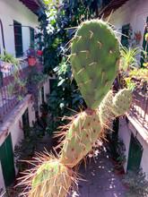 Cactus In Old Style Spanish Apartments (Corral De Vecinos)