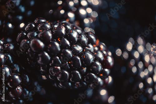 Fototapeta ripe organic blackberries close up