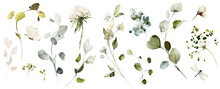 Set Watercolor Herbal Elements Of Wild  Flowers, Leaves, Branches, Botanic  Illustration Isolated On White Background.  Eucalyptus