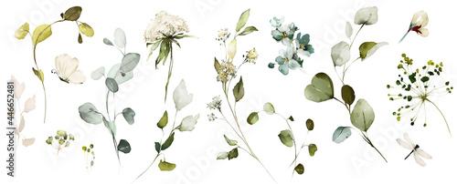 Billede på lærred Set watercolor herbal elements of wild  flowers, leaves, branches, Botanic  illustration isolated on white background