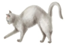 Watercolor Cute Cat.