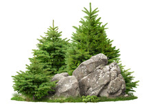 Cutout Rock Surrounded By Pine Trees. Garden Design Isolated On White Background. Decorative Shrub And Stones For Landscaping. High Quality Clipping Mask For Professionnal Composition.