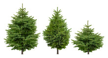 Cutout Pine Tree. Set Of Conifers Isolated On White Background. High Quality Clipping Mask For Professional Composition. Evergreen Tree.