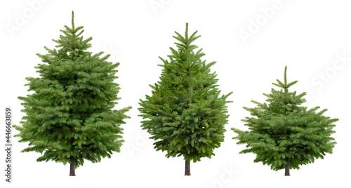 Canvas Cutout pine tree