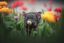 Cute Grey Minipig With Big Ears Sniffing An Unopened Flower Among Already Blooming Yellow And Red Tulips