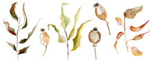 Autumn Twigs With Leaves Watercolor Illustration. Template For Decorating Designs And Illustrations.